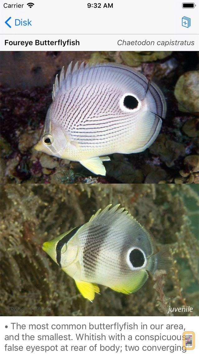 Screenshot - Easy Fish ID Caribbean