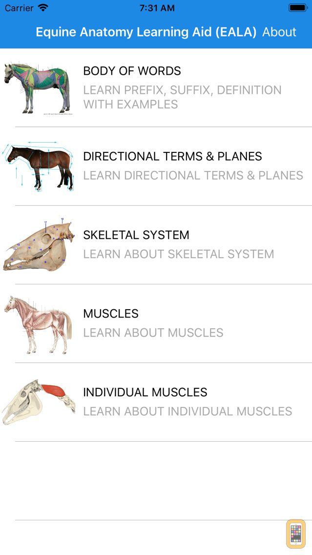 Screenshot - Equine Anatomy Learning Aid