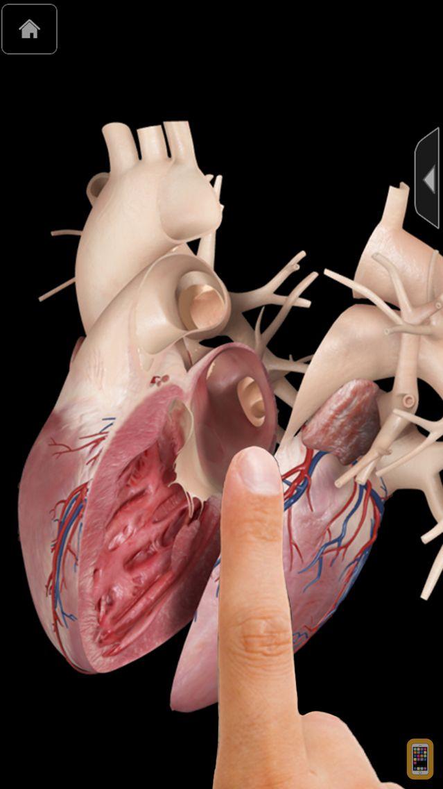 Screenshot - Heart Pro III - iPhone