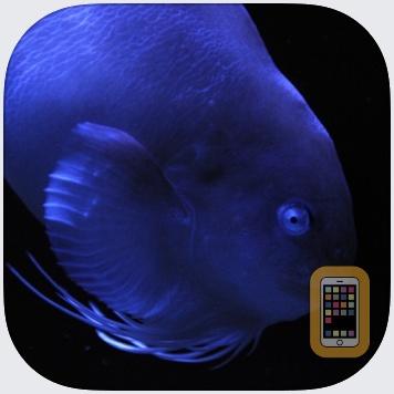 Fish in Aquamarine-FUKUSHIMA by Writeback Co.,Ltd. (Universal)