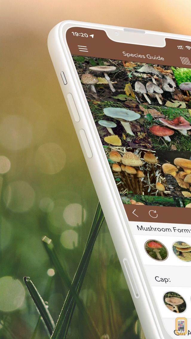 Screenshot - Mushrooms PRO - Hunting Safe