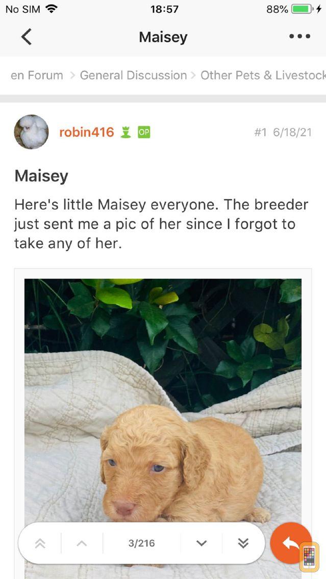 Screenshot - Chicken Forum