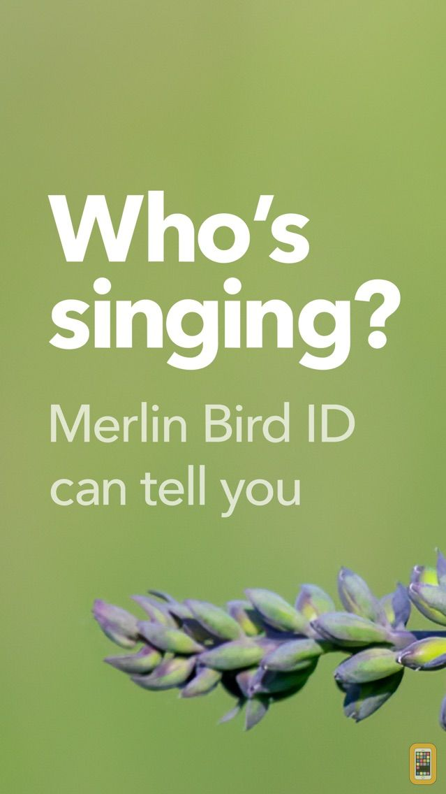 Screenshot - Merlin Bird ID by Cornell Lab of Ornithology